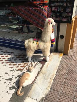 Gatto nel quartiere Miraflores